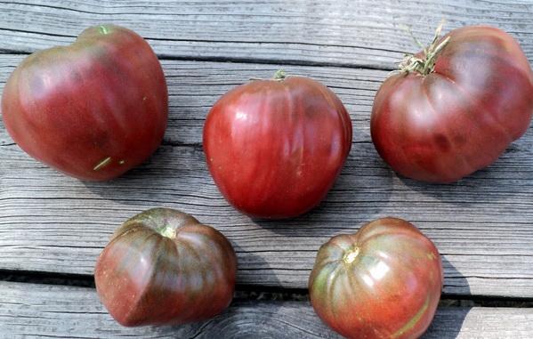 Томат Бычье сердце: отзывы, фото, урожайность, описание и характеристика