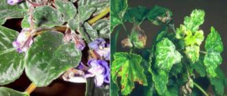 Тля на растениях