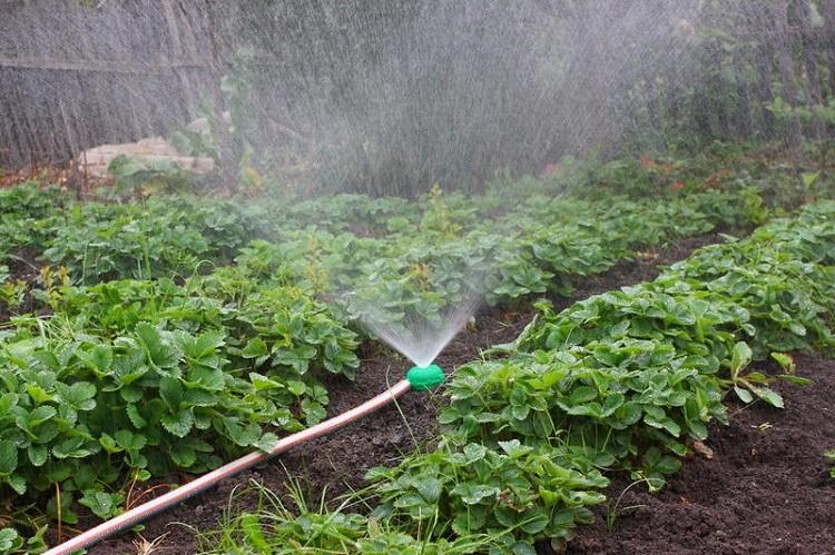 Как избавиться в саду либо в огороде