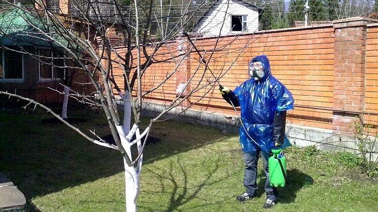 Опрыскивание деревьев медным купоросом