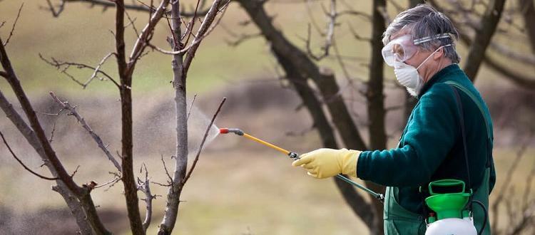 Опрыскивание деревьев весной - методы и результаты