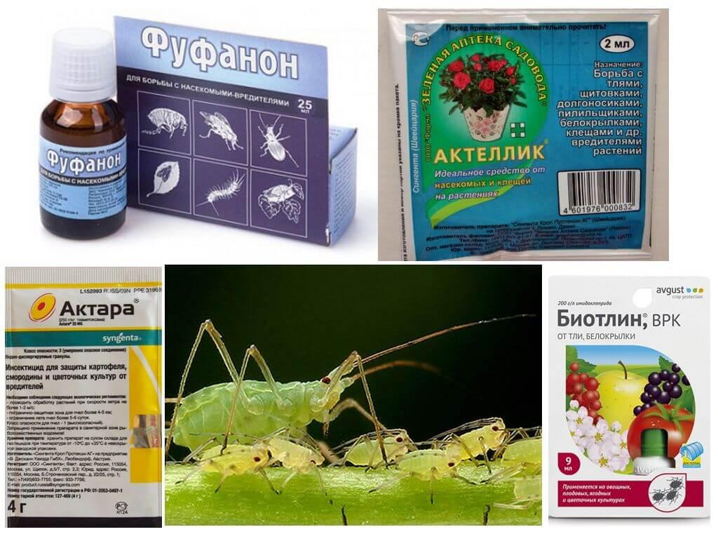 Препараты против тли и гусениц
