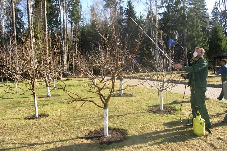 Опрыскивание весной плодовых деревьев