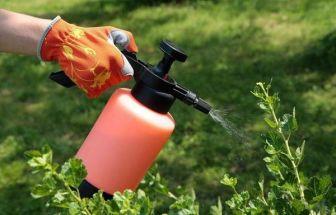 Опрыскивание винограда от паразитов