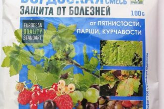 Бордоская смесь используется для профилактики заболеваний огурцов