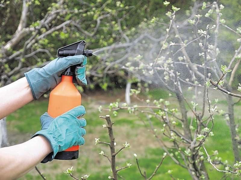 Обработка яблони от болезней