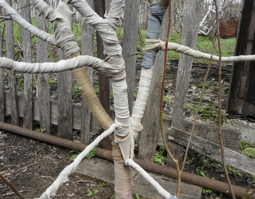 Материалами для укрытия молодых яблонь на зиму может служить мешковина