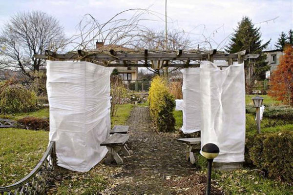 Молодой сад подготовка к зиме