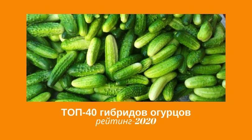 Новинка семян огурцов